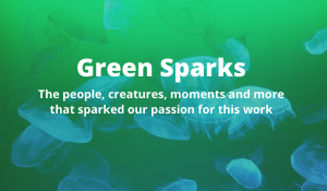 Our Team's Green Sparks
